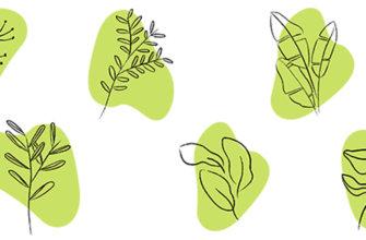 Картинка зелёные листья растений для хайлайтов инстаграм