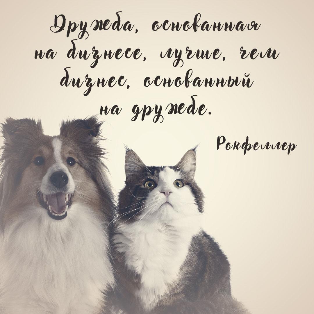 Картинка с рукописным текстом цитаты про дружбу на фоне монохромной фотографии кошки и пастушьей собаки.