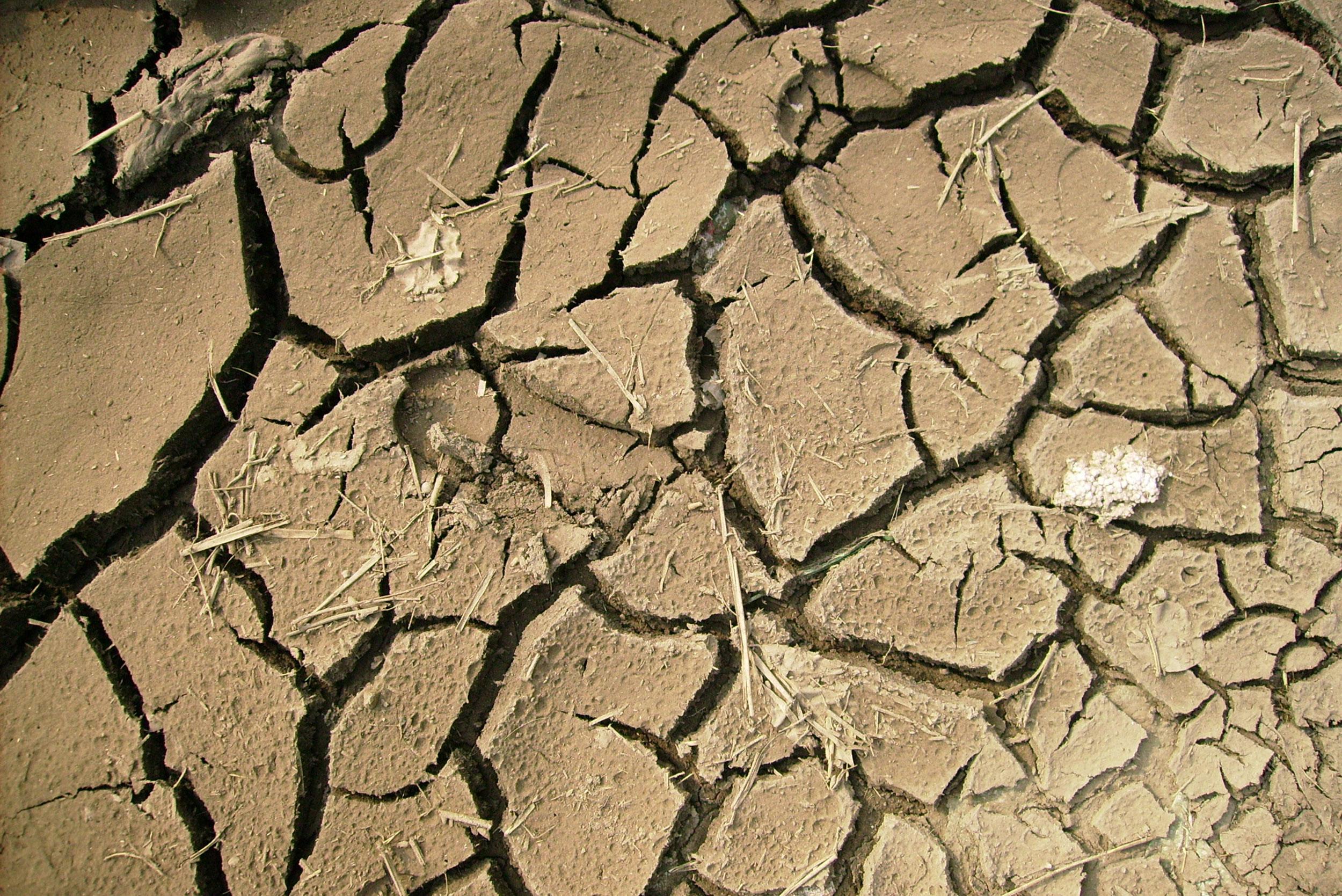 Картинка текстура почва в засуху