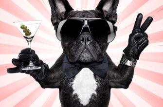 Картинка открытка с днюхой с французским бульдогом в солнечных очках, галстуке-бабочка, в черных перчатках с жестом виктори лапой