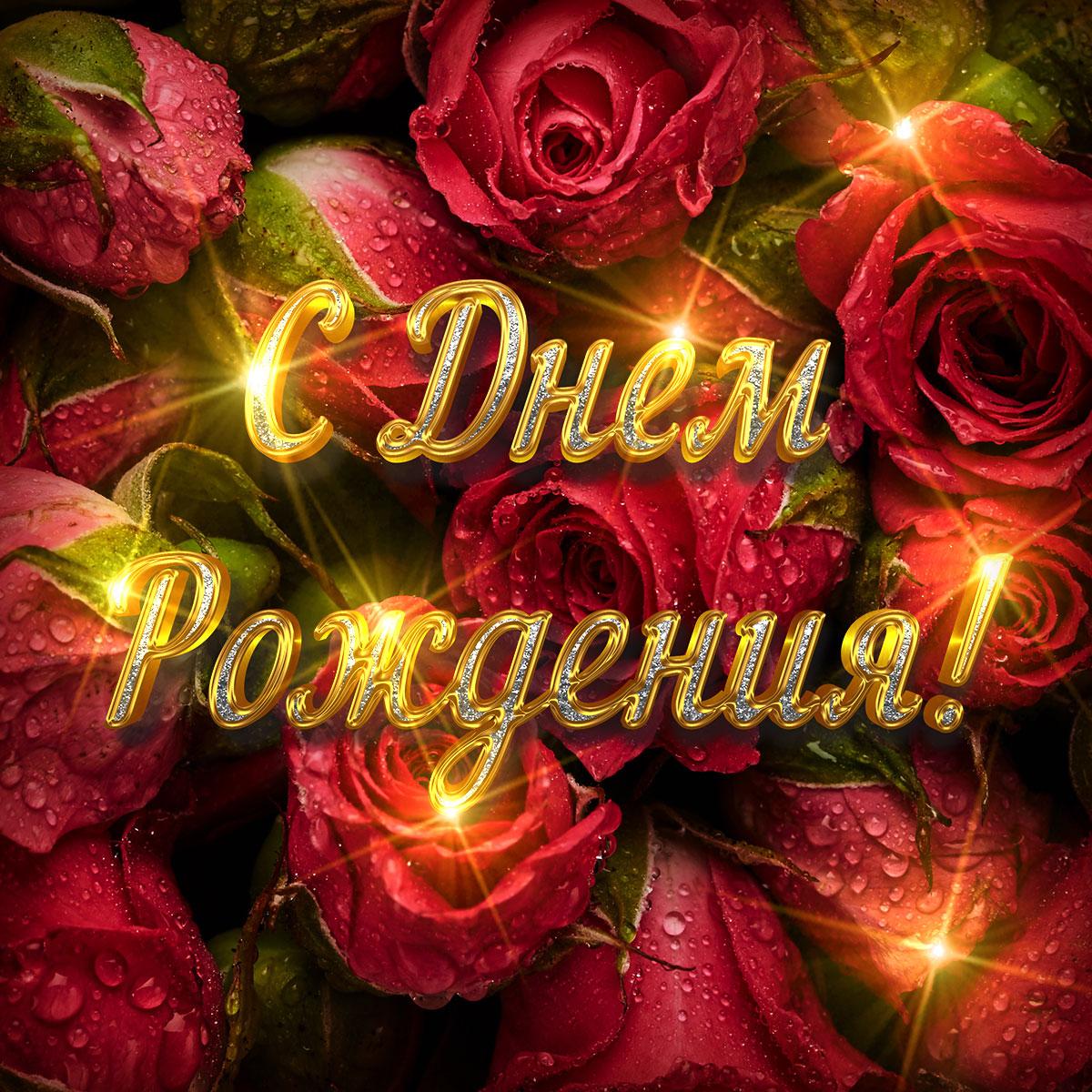 Фото красные садовые розы с золотой надписью с днём рождения!