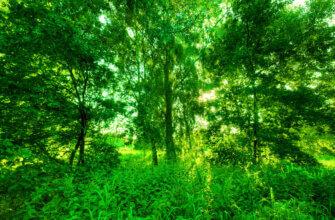 Фотография летний фон леса для фотошопа со старыми деревьями и зелёными растениями в солнечный день