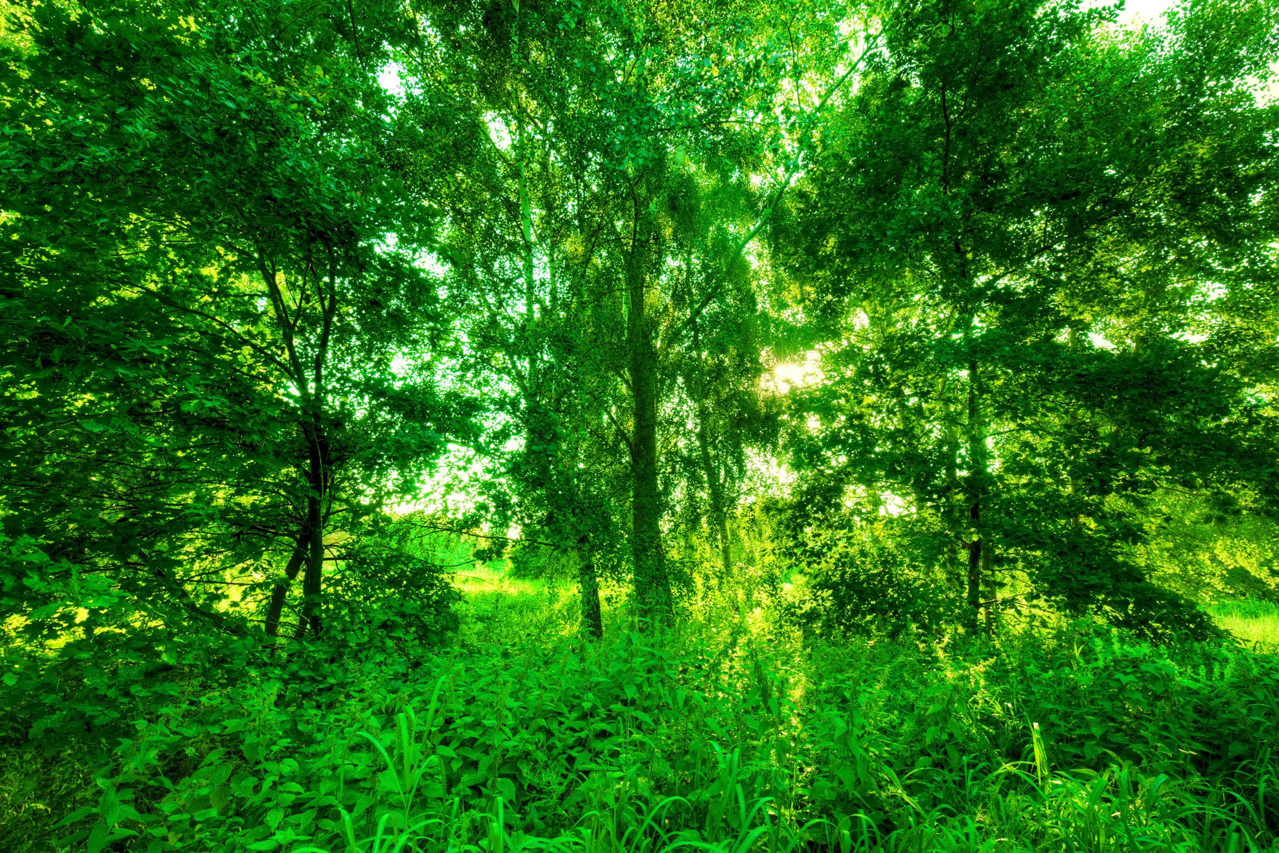 Летний лес с ярко-зелёной листвой.