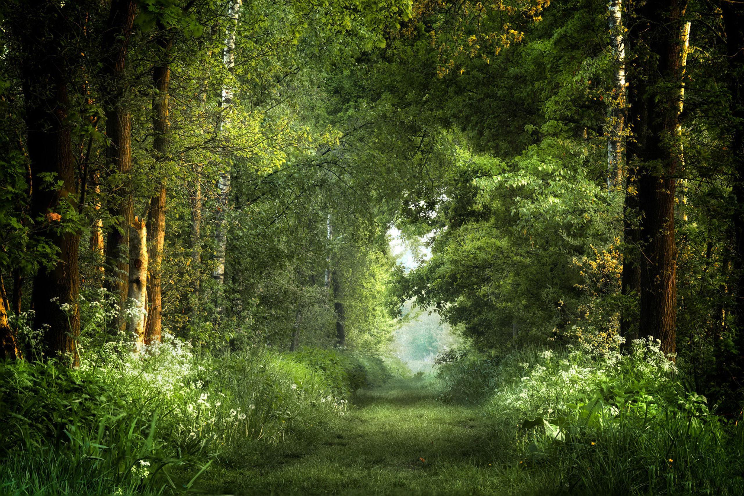 Фотография фон для фотошопа лес летним утром с густой растительностью из старых деревьев