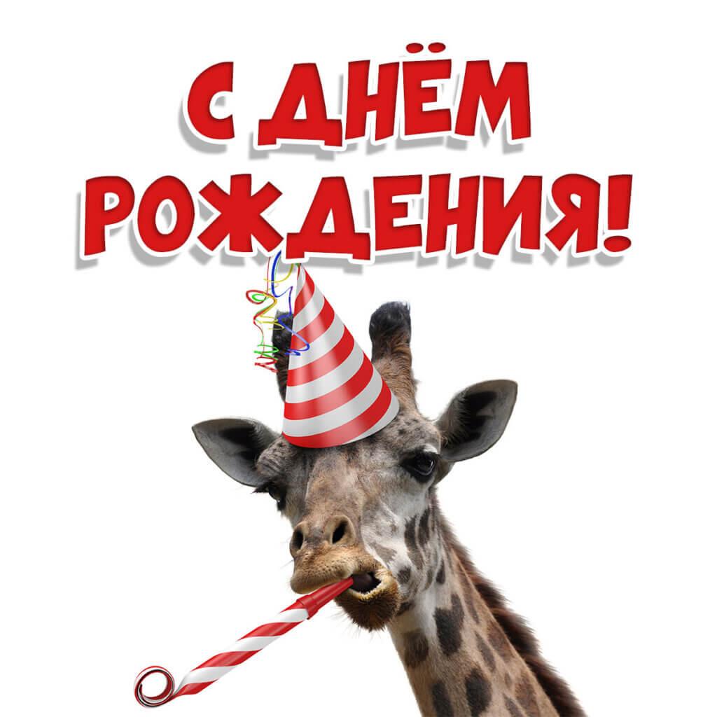 Фото с днем рождения скачать бесплатно с мордой жирафа в шляпе для вечеринок и поздравительной надписью.