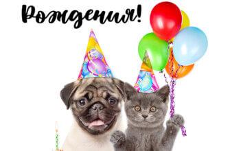Смешная фото - открытка с днем рождения: вечеринка кота и мопса в праздничных шляпах с воздушными шарами и кексом.