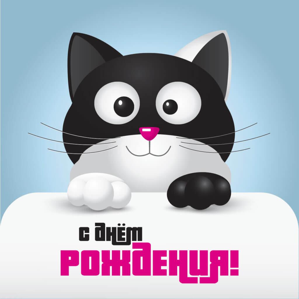 Картинка прикольная открытка с днем рождения с мордочкой и лапами котёнка в чёрно - белом окрасе на голубом фоне..