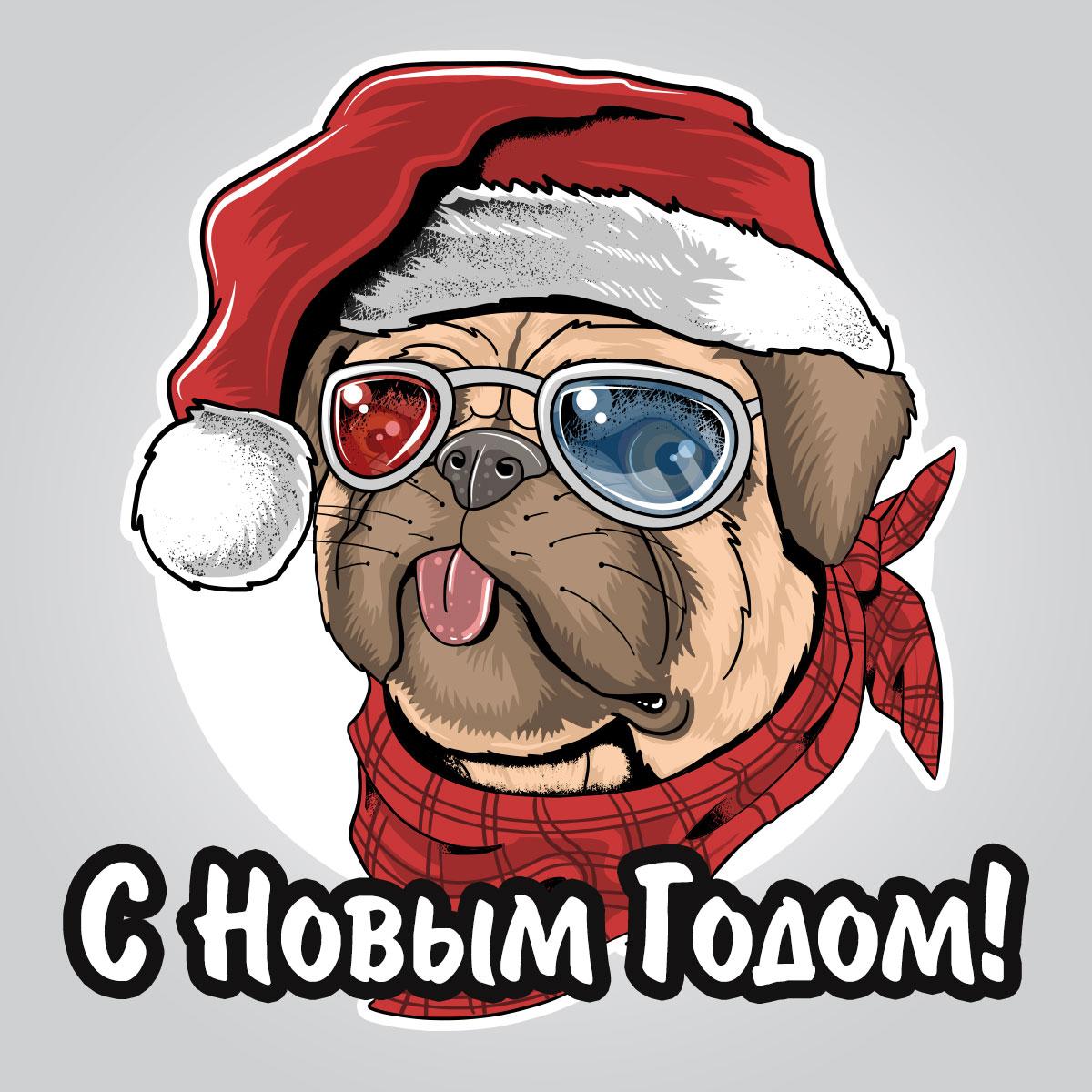Собака в солнечных очках и шапке санта клауса.