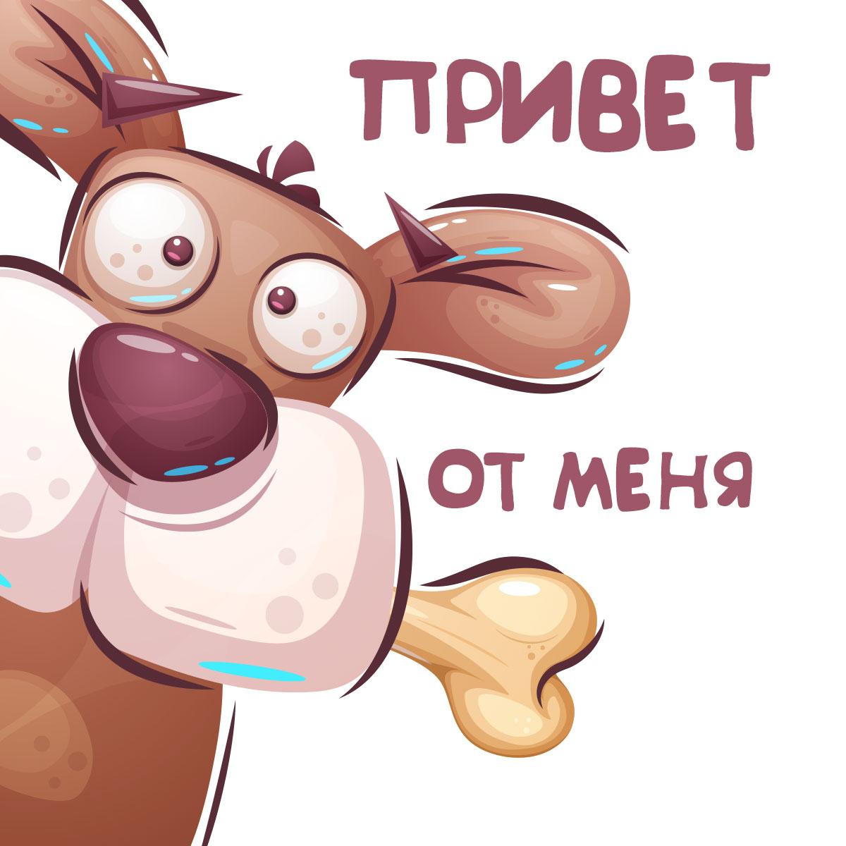 Картинка с надписью - мультипликационная открытка привет от меня для настроения с мордой коричневой собаки с большим носом и ушами и костью в пасти.