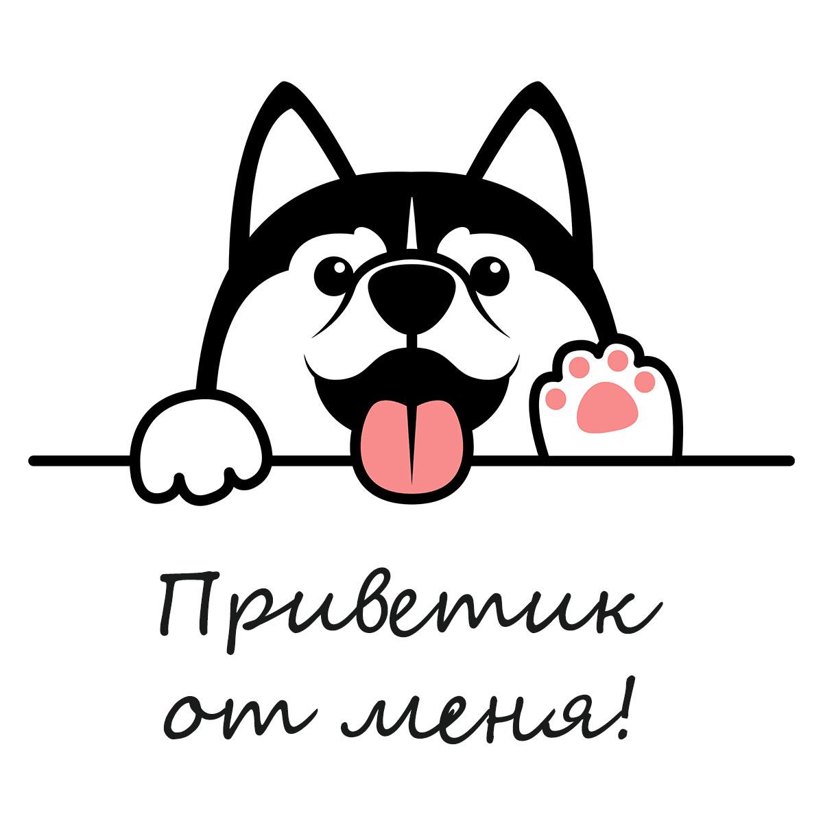 Черно-белая собака с розовым языком на белом фоне.