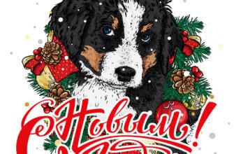 Картинка поздравление подруге с новым годом со щенком Бернской горной собаки с ветками и шишками сосны и праздничными украшениями.