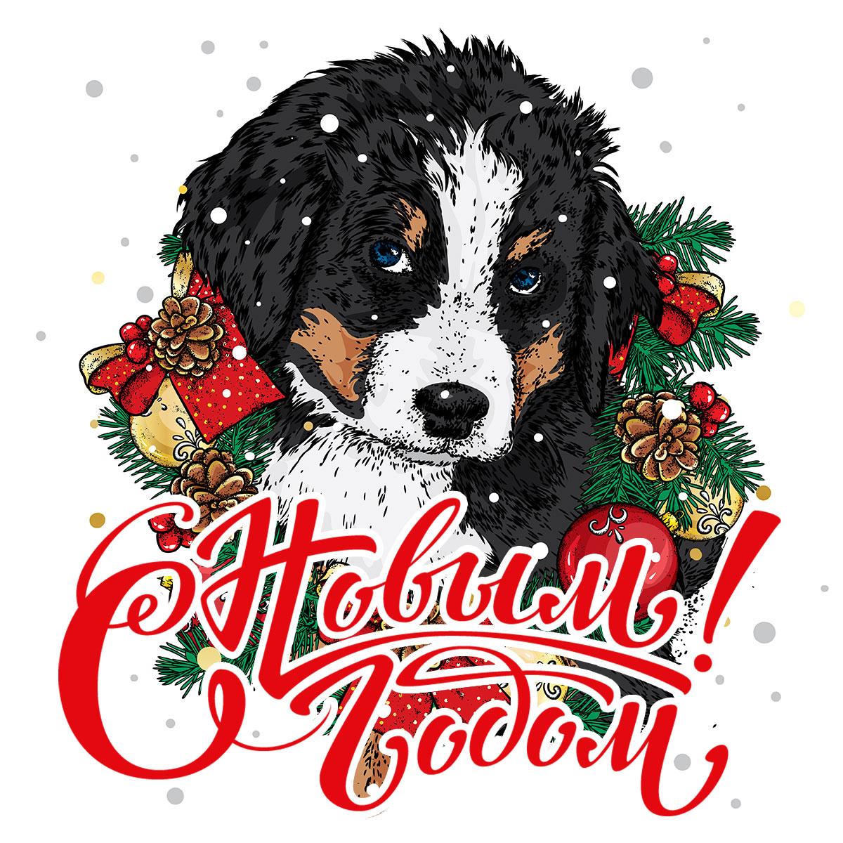 Щенок Бернской горной собаки с ветками сосны и праздничными украшениями.
