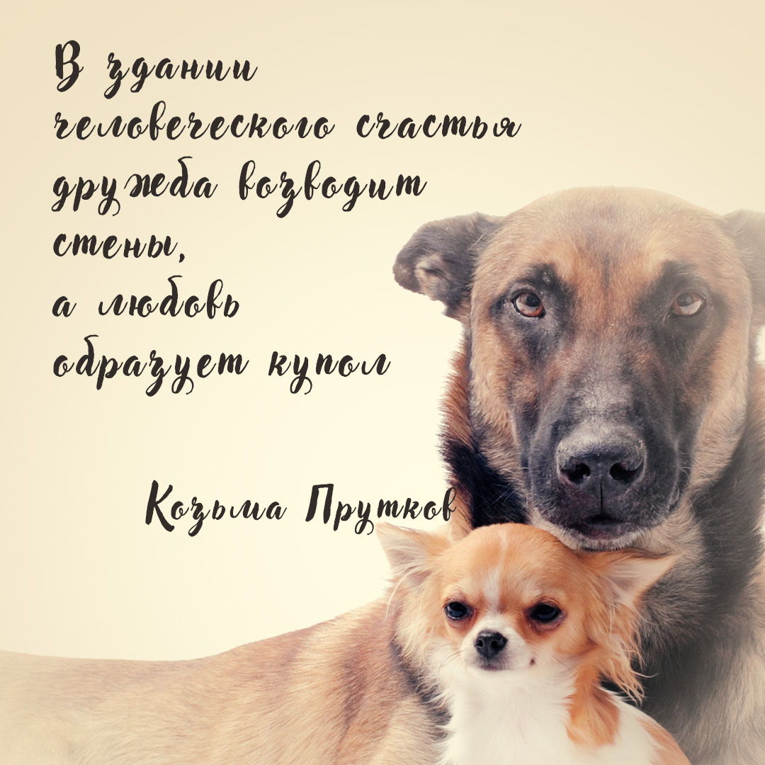 Фотография с подписью красивой цитаты на фоне большой и маленькой собак.