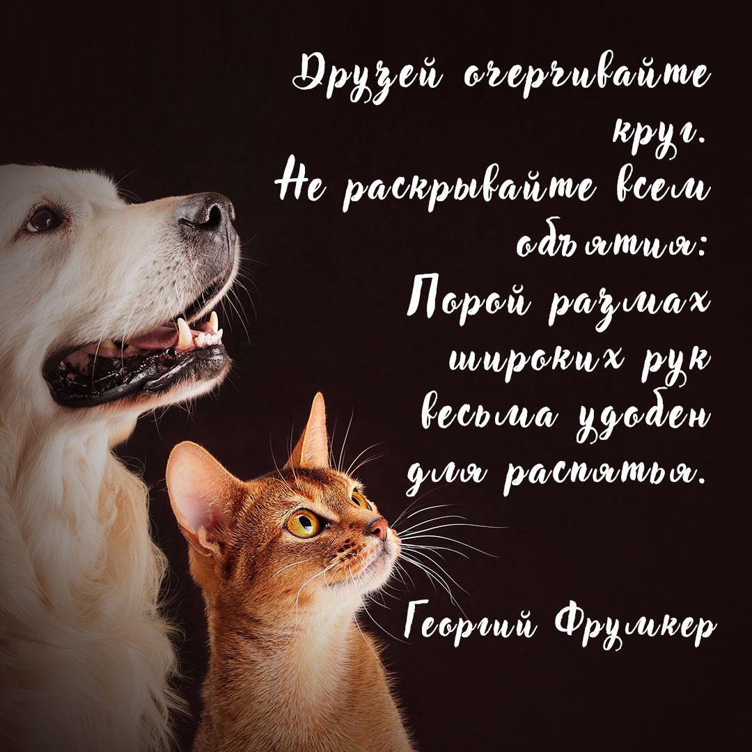 Надпись на темном фоне с кошкой и собакой.