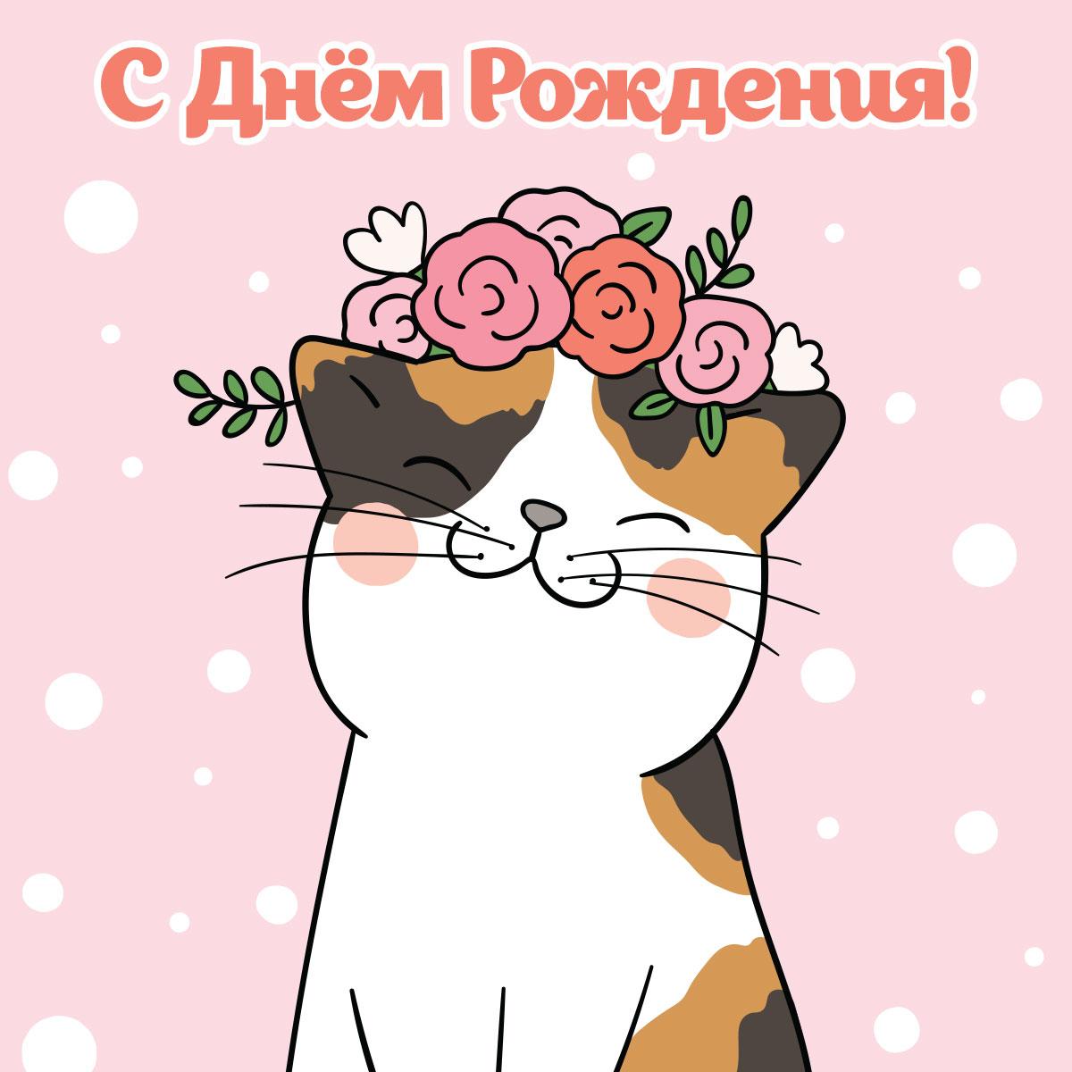 Кошка с довольной мордочкой на розовом фоне поздравляет с днем рождения.