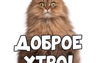 Фотография с надписью доброе утро: сидящая кошка персидской породы со светло коричневым мехом.