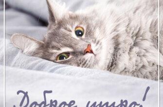 Фото с рукописным текстом доброе утро: любопытная морда серой кошки, лежащей на постели.