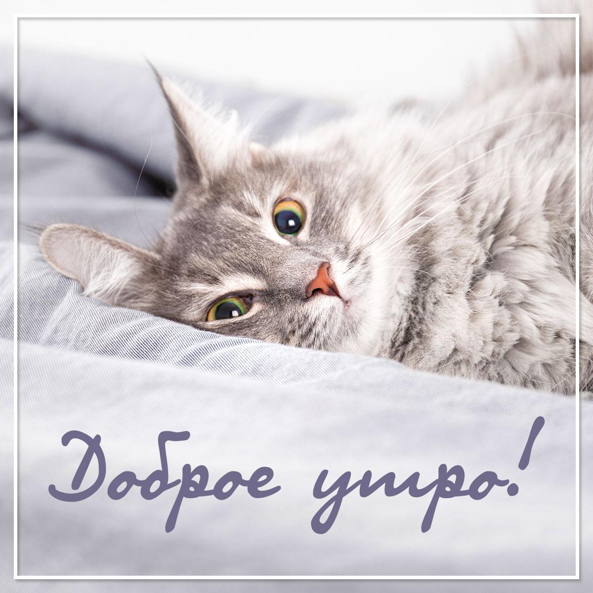 Фото серой кошки, лежащей на постели с рукописным текстом доброе утро!