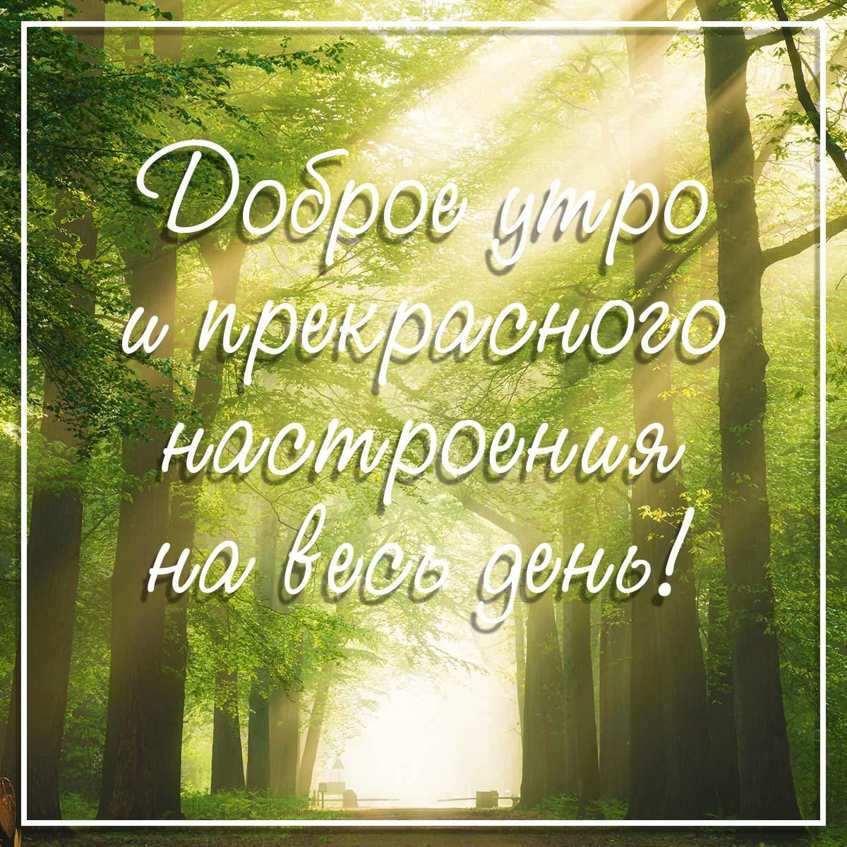 Фото с надписью доброе утро и прекрасного настроения на фоне утреннего пейзажа с высокими лиственными деревьями, залитыми солнечным светом.