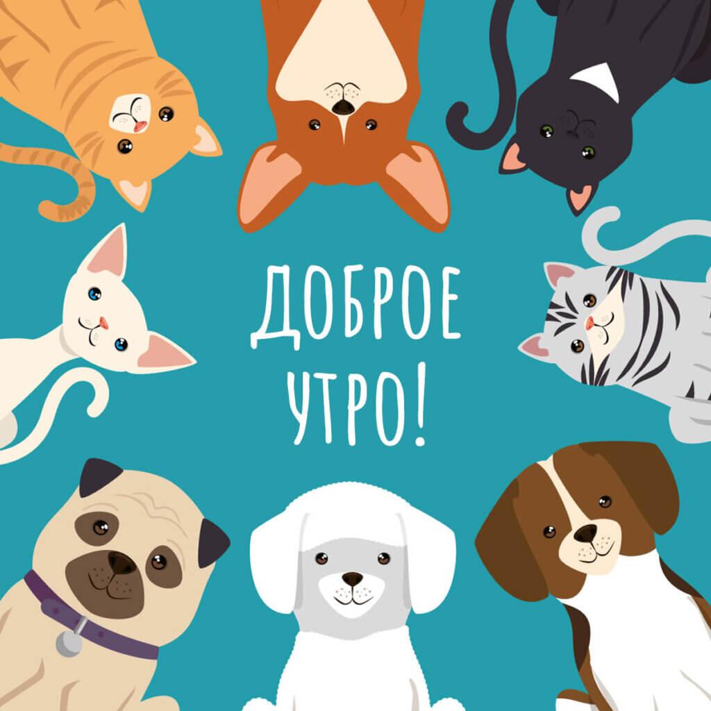 Картинка с надписью доброе утро собачки и кошечки на бирюзовом квадрате.