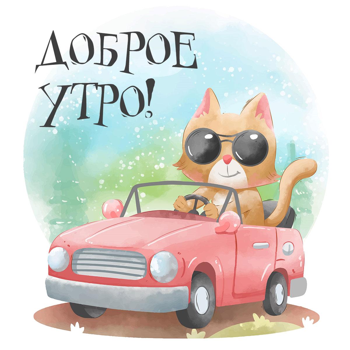 Котик в круглых солнечных очках в красной машине встречает доброе утро.