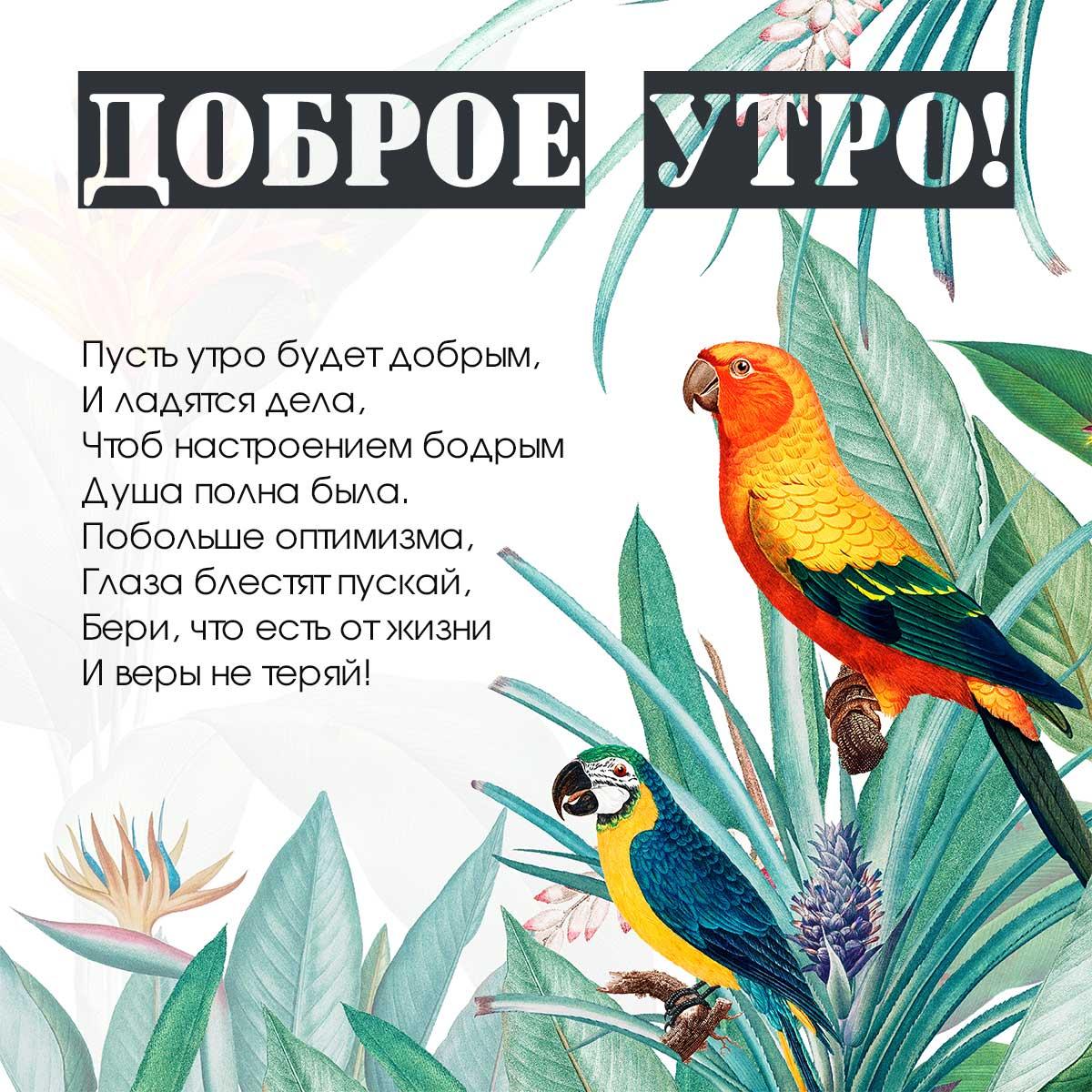 Картинка с текстом доброе утро с пожеланиями в стихах на фоне попугаев с ярким оперением на ветках зелёных тропических растений.