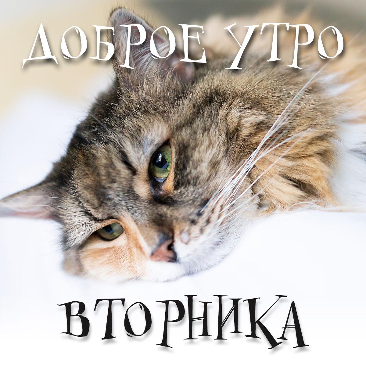 Фотография с надписью доброе утро вторника на фоне кошки.