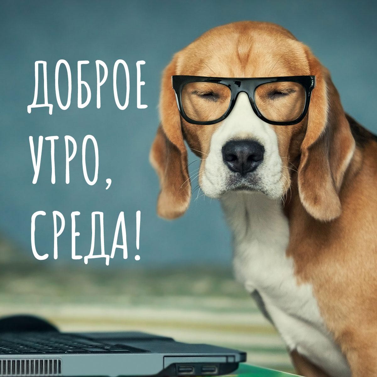 Фото с подписью доброе утро среда: собака с коричневой шерстью в очках возле открытого ноутбука.