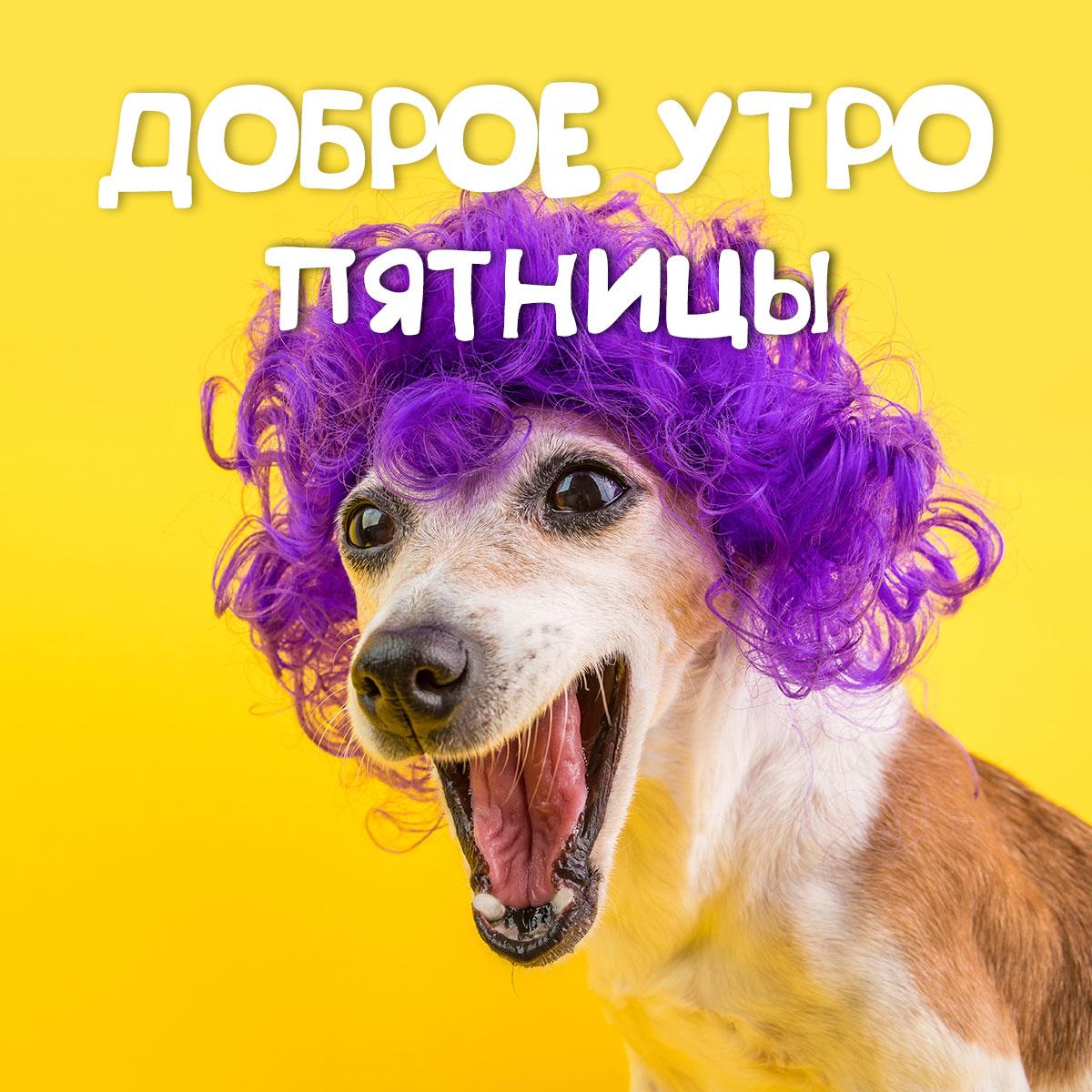 Картинка с добрым утром пятницы с мордой собаки в фиолетовом парике и текста на жёлтом фоне.