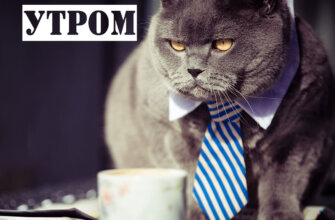Фото открытка с надписью с добрым утром понедельника с серым котом в бело-синем мужском галстуке возле кружки чая.