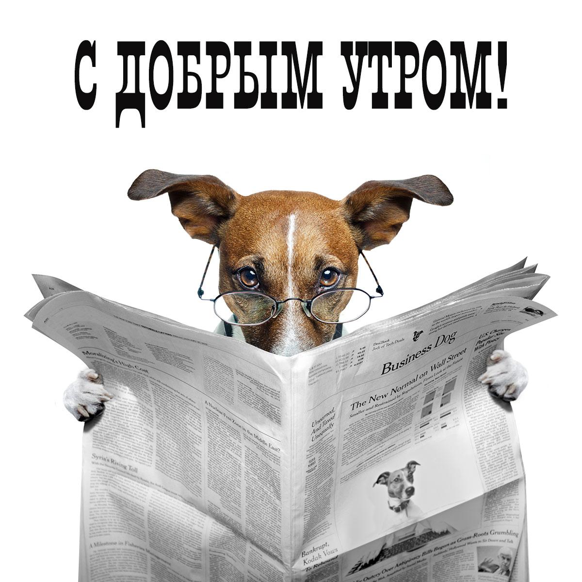 Картинка с надписью с добрым утром с собакой в очках, читающей газету.