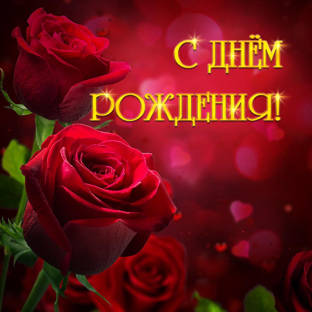 Фото с днем рождения женщине красивые цветы - красные садовые розы с золотой надписью.