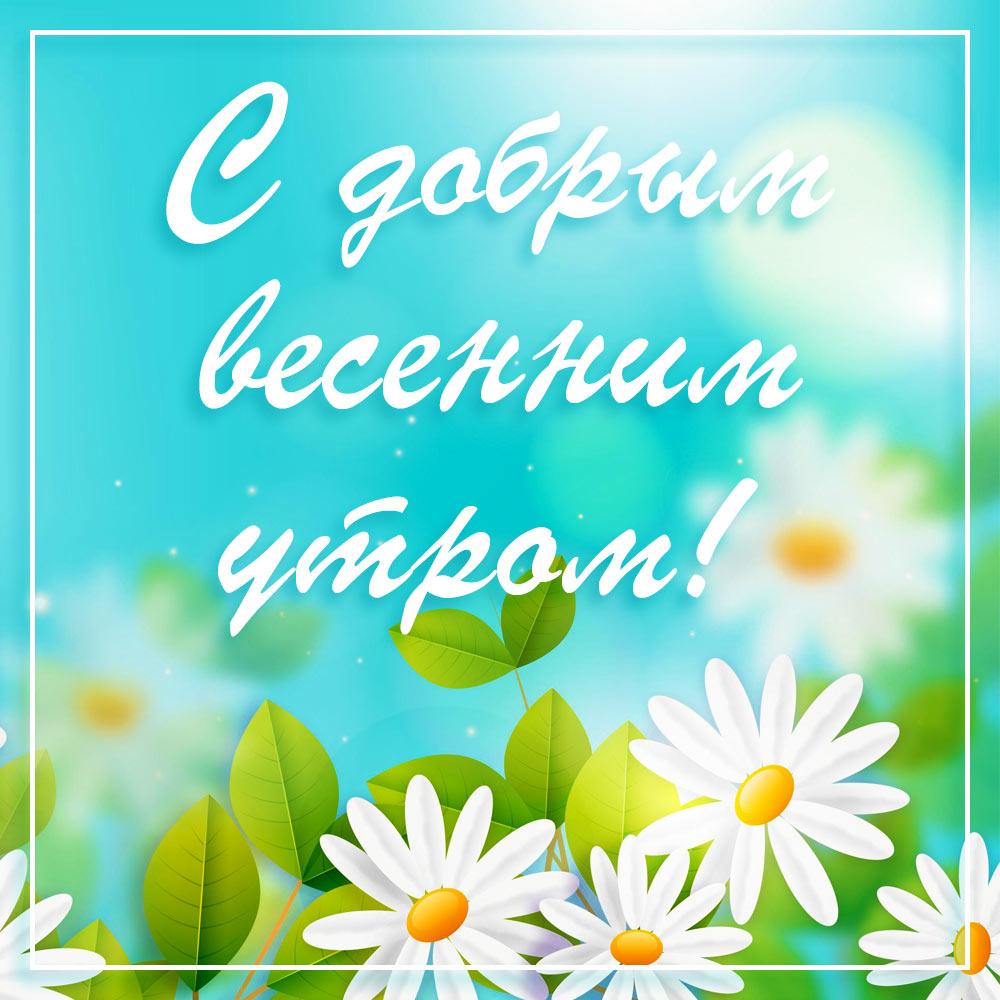 Полевые ромашки и пожелание с добрым весенним утром!