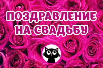Обложка для видео поздравления на свадьбу с красными розами и чёрным котом в круге