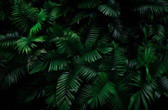 Фон пальмы для фотошопа с зарослями вечнозелёных тропических листьев.