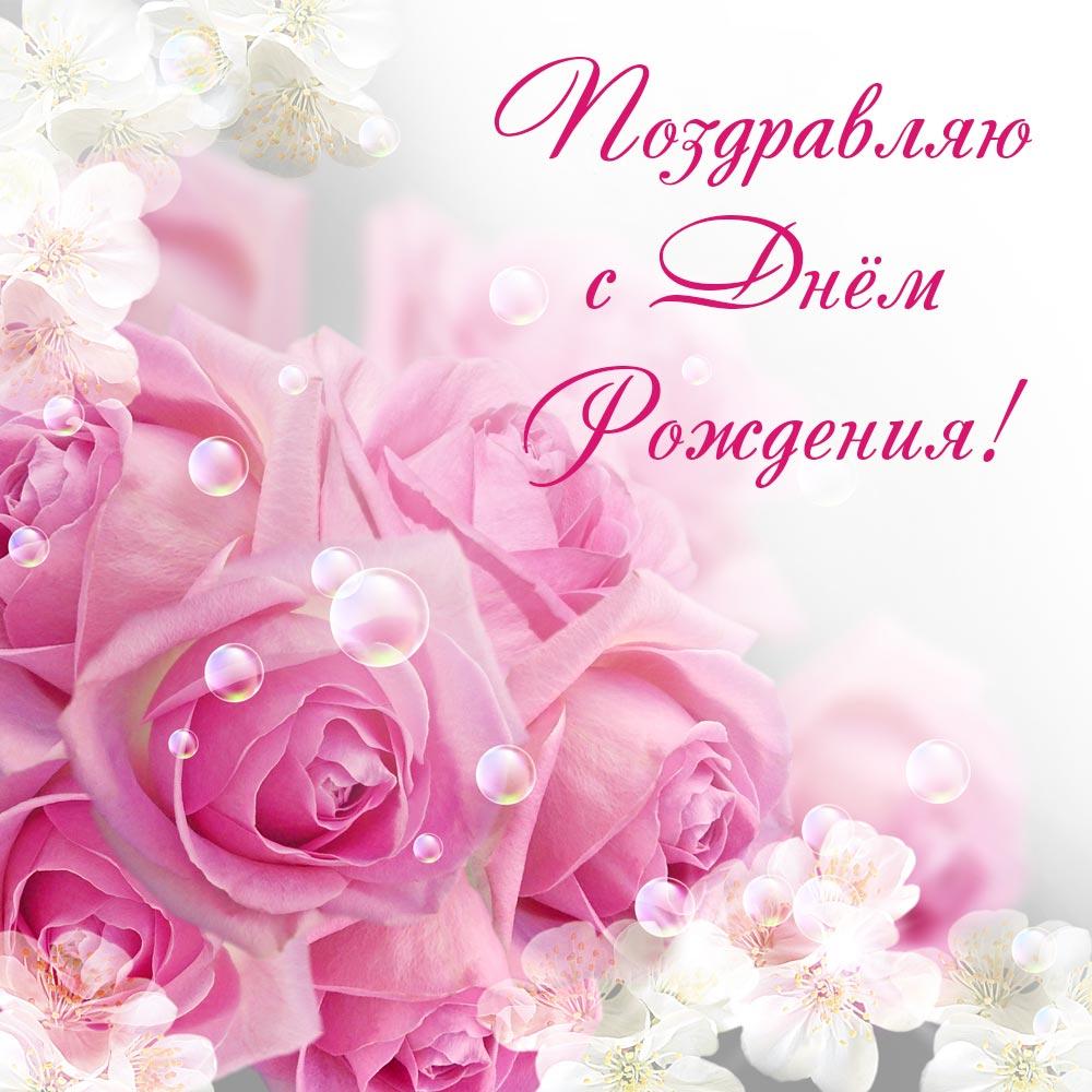 Фото красивые розы Центифолия с текстом поздравляю с днём рождения!