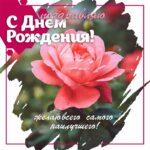 Фото цветка чайной розы ко дню рождения женщинам.