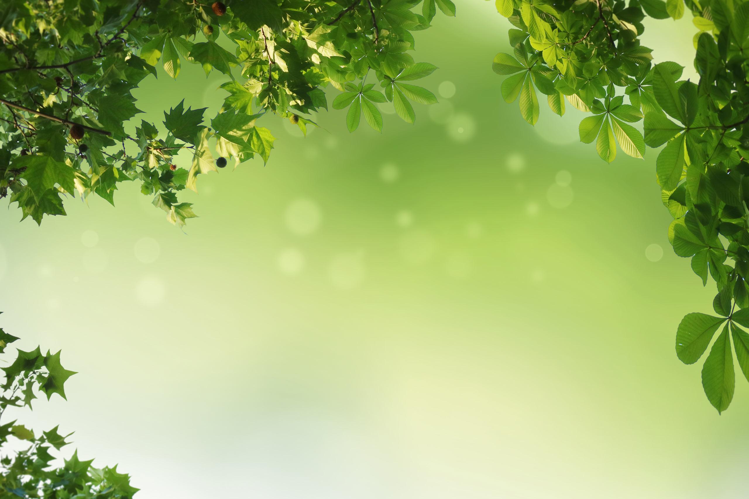 Зеленый фон с ветками и листьями дерева.