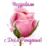 Яркая картинка цветок роза к дню рождения женщинам.