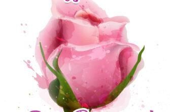 Картинка к дню рождения женщине цветок гибридной чайной розы с текстом.